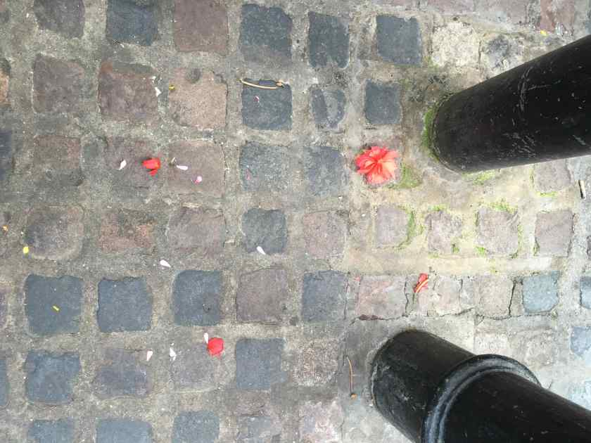 Soho pavement petal-strewn