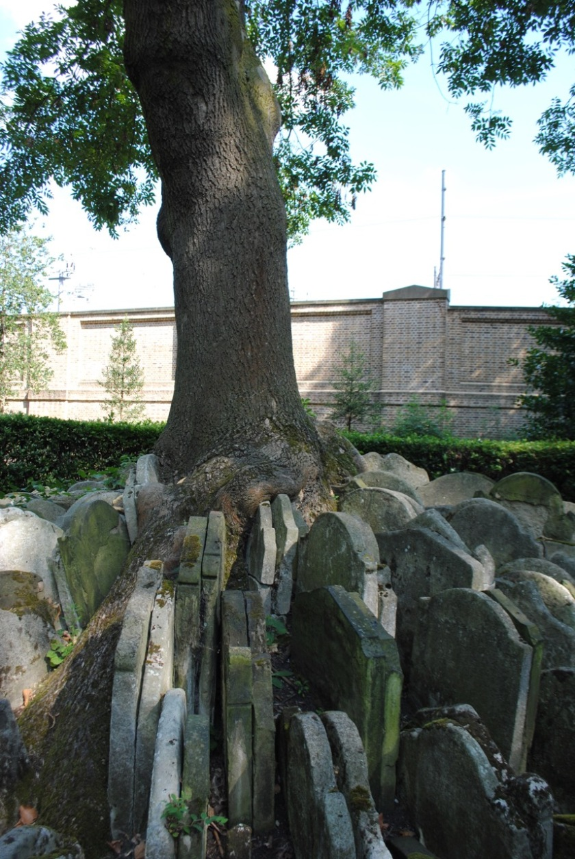 Hardy Tree